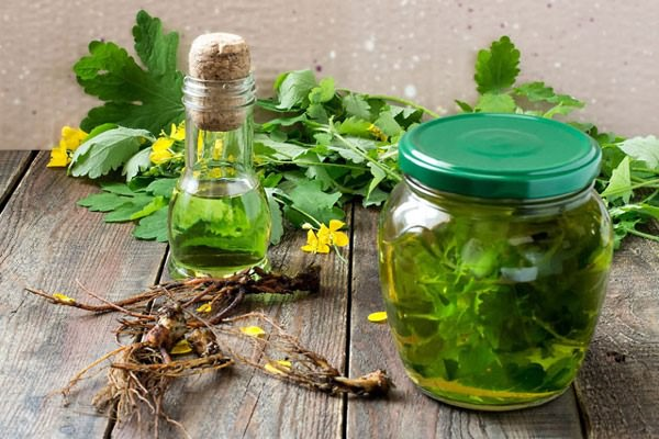приготовление масла из чистотела в домашних условиях