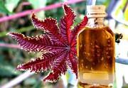 касторовое масло для лечения удаления папиллом