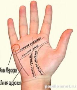Фото названий линий на руке