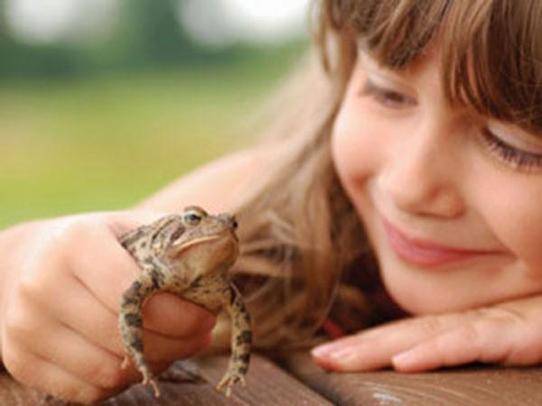 доказано, что лягушки не являются переносчиками папилломавируса