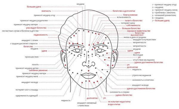 схема расположения невусов у мужчин